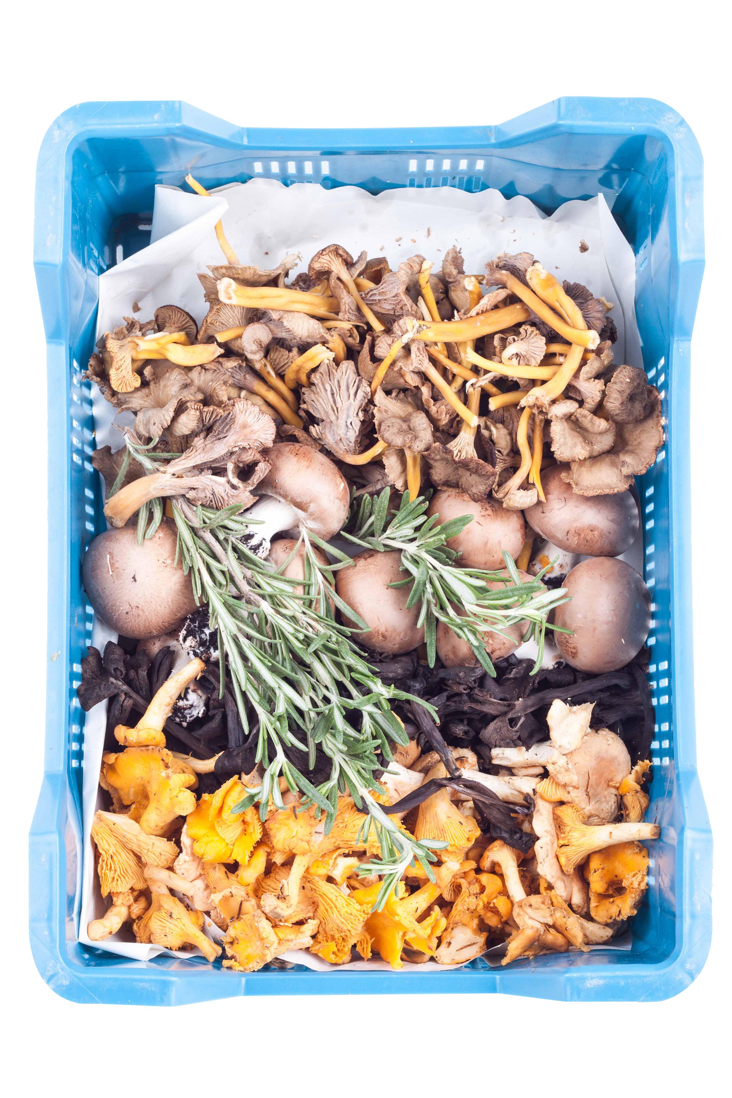 Champignon bosmengeling 1,2kg